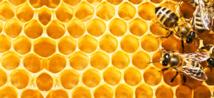 Gestion du stress et apiculture (47)